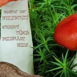 Pamětní list Doloplazy 2009